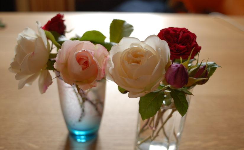 菜園日誌 180623-24 卓上のバラ